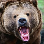 bear_teeth