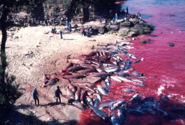 dolphin slaughter research paper